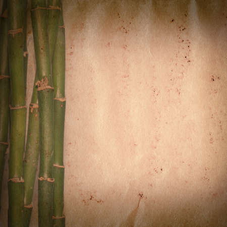 bamboo on old grunge paper texture background Stock Photo - 13463417