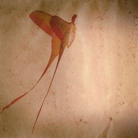 moths: long tail butterfly moth on old grunge paper texture background Stock Photo