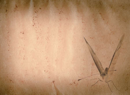 butterfly old grunge paper texture background photo