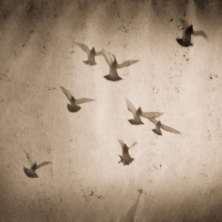 flying dove group old grunge paper texture background Stock Photo - 13463454