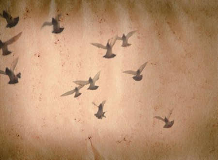 flying dove group old grunge paper texture background photo