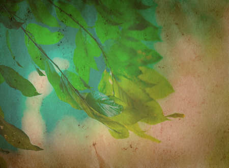 spring nature green leaf old grunge paper texture background Stock Photo - 13463513