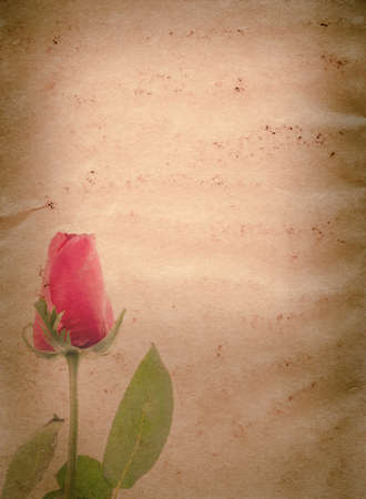 red rose flower old grunge paper texture background Stock Photo - 13463544