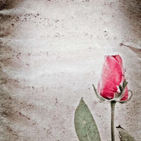 red rose flower old grunge paper texture background Stock Photo - 14304863