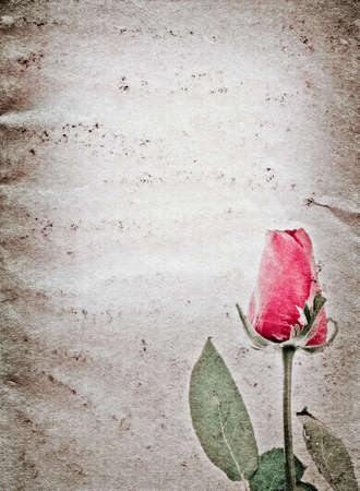 red rose flower old grunge paper texture background Stock Photo - 14304901