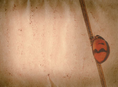 insect ladybug old grunge paper texture nature background photo
