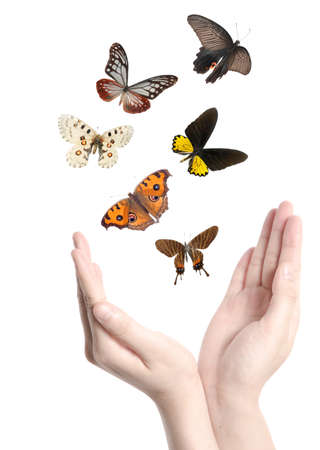 butterfly hand: flying butterfly on hand concept background Stock Photo