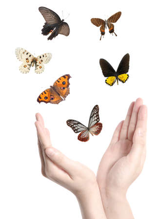 releasing: flying butterfly on hand concept background Stock Photo