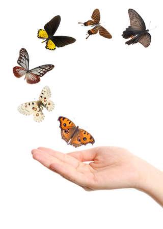 손 개념 배경에 나비 비행