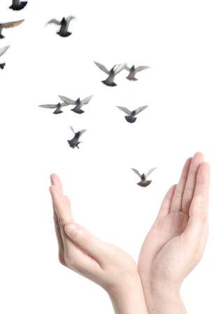 flying dove with open hand isolated on white freedom concept background Stock Photo - 14304322