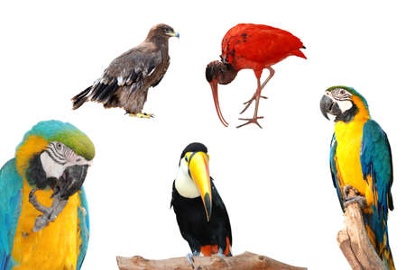 wild animal bird collection isolated photo