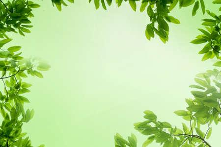 lente groen blad achtergrond