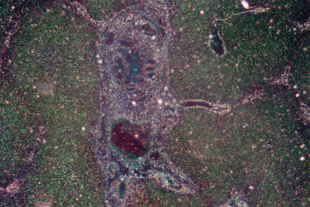 photomicrograph: science medical anthropotomy physiology micrograph of liver tissue