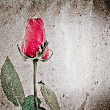 red rose flower old grunge paper texture background photo
