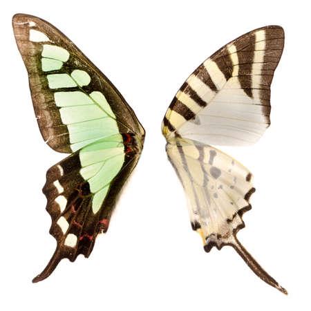 aile de papillon isolé sur blanc