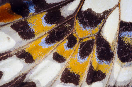 yellow butterfly: butterfly wing detail pattern texture background