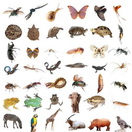 salamandre: animaux