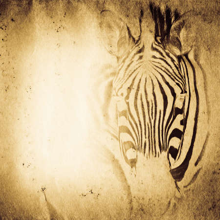 wild aniaml zebra old grunge paper texture background photo