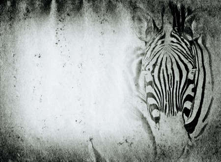 photography backdrop: wild aniaml zebra old grunge paper texture background