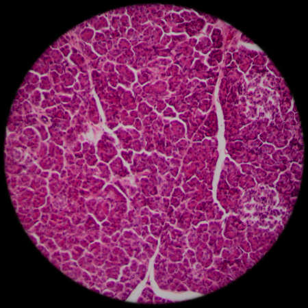 human cell: science microscopic section of liver tissue