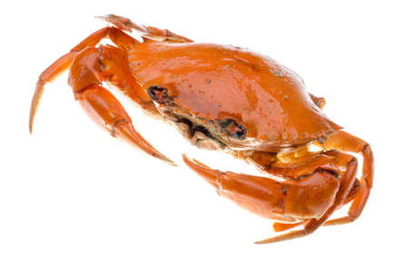 ciep�o: seafood czerwony krab na białym Zdjęcie Seryjne