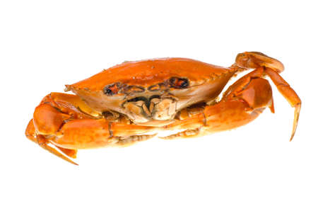 acute angle: seafood red crab isolated on white Stock Photo