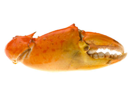 crab claw isolated on white photo
