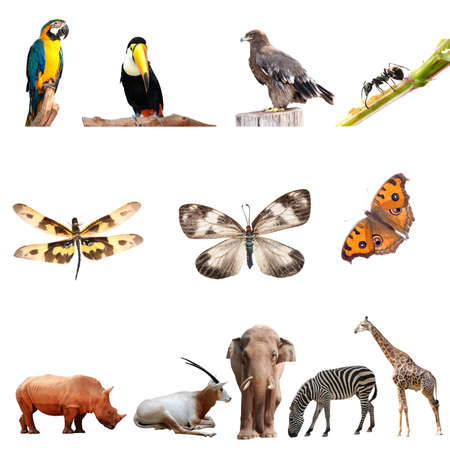 real animal collection isolated on white photo