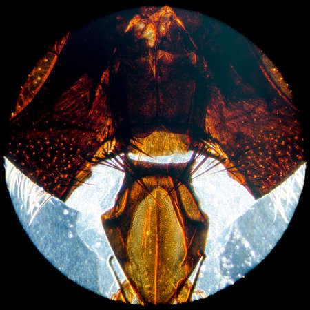 microscopy: education science microscopy micrograph animal insect fly head