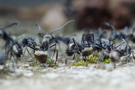 insect ant on ground macro Stock Photo - 17408544
