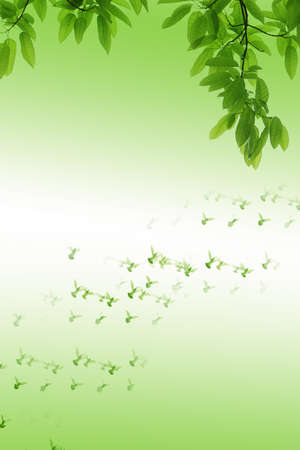 air animals: leaf and dove green background