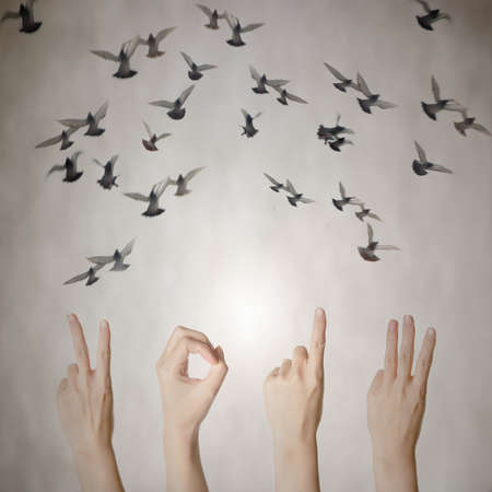 hand with 2013 number and flying doves new year background photo