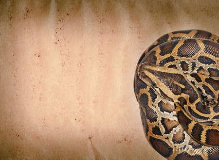 snake on old grunge paper texture background photo