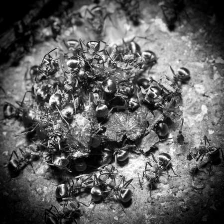 insect ant on ground macro Stock Photo - 18283217