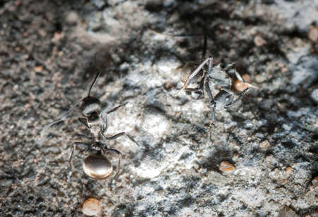 insect ant on ground macro Stock Photo - 18283224