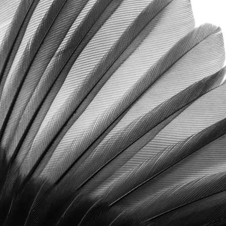 bird wing feather texture background photo