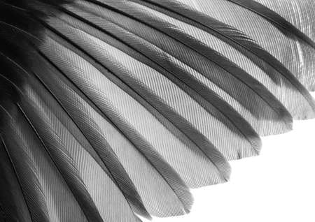 bird wing feather texture background