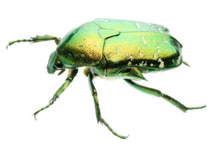 green beetle isolated on white background photo