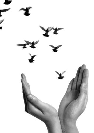 flying dove with open hand isolated on white freedom concept background photo