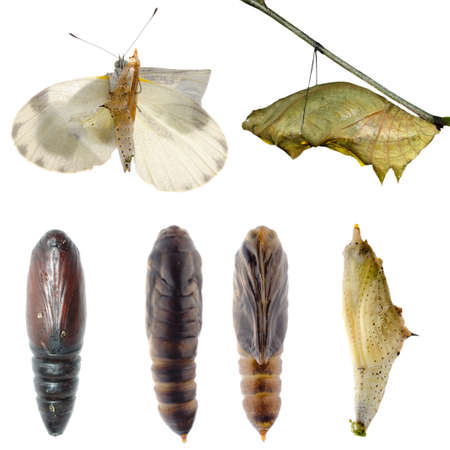 Animal set, butterfly and moth cocoon collection isolated photo
