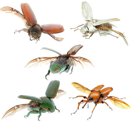 animal set, flying beetle collection isolated Stock Photo