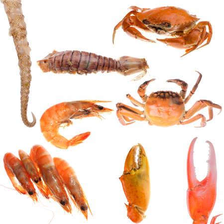 cangrejo: conjunto de animales, cangrejo y mariscos colecci�n camar�n aislado en blanco