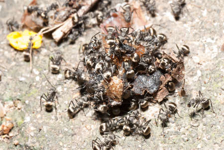 insect ant on ground macro Stock Photo - 20918339