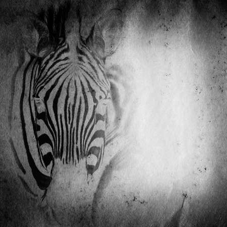 wild aniaml zebra old grunge paper texture background photo
