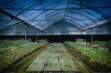plant green house orchid flower nursery photo