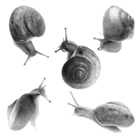 gastropod: animal set, snail collection isolated