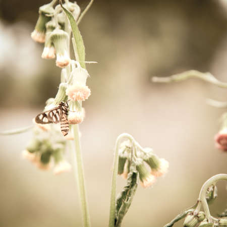 insect Amatidae moth on flower outdoor photo