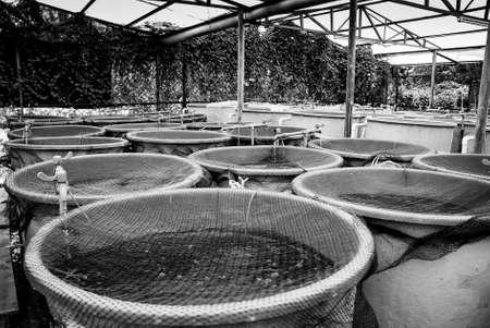 fischerei: Landwirtschaft Aquakultur Wassersystem Bauernhof