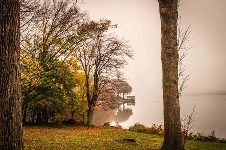 Foggy morning at the park
