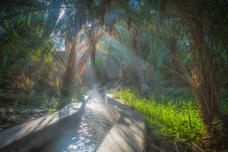 Irrigation channel  on a misty morning in Al Ain Oasis, United Arab Emirates 写真素材